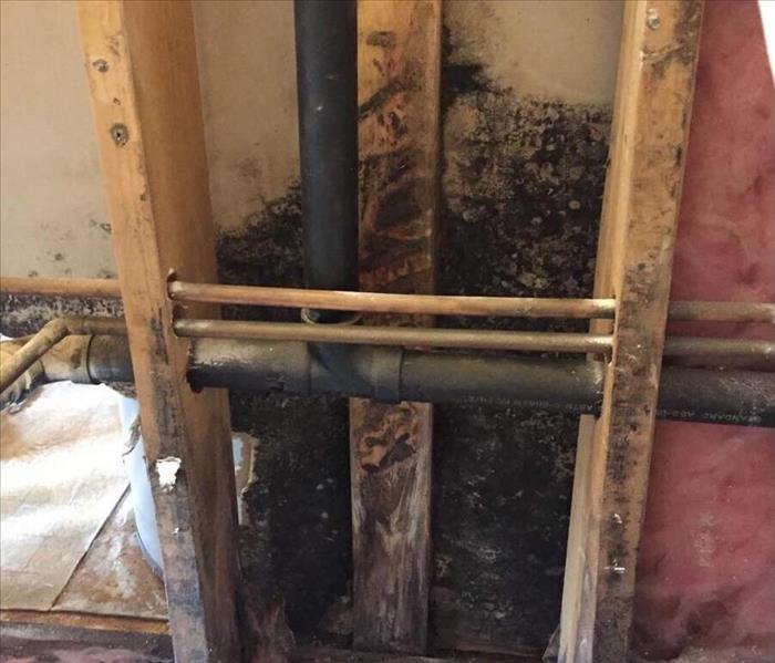 Mold Clean Up in Casper, WY Before