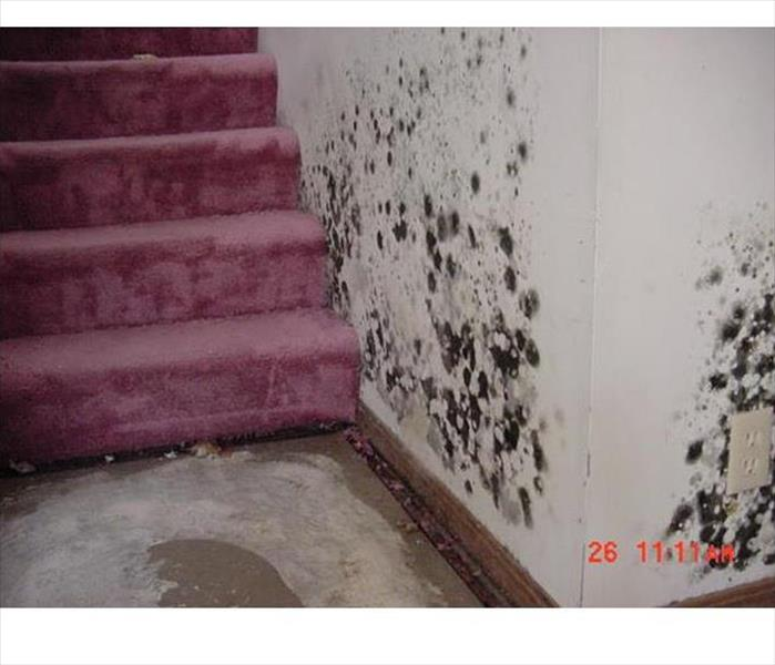 Mold Remediation Mold Clean Up