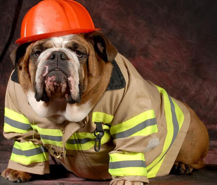 A dog in a fire fighters uniform