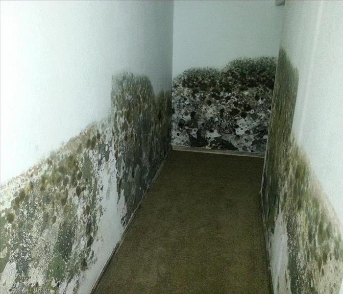 Mold Remediation Steps for Mold Clean Up in Casper, WY