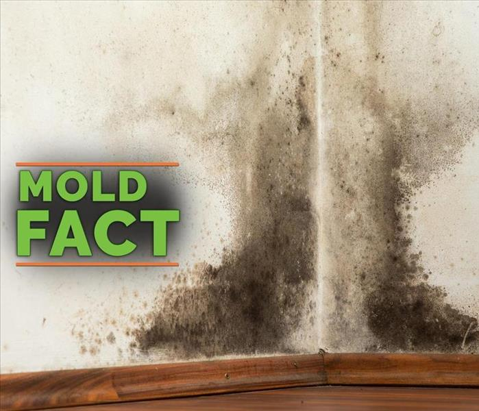 Mold Remediation Types of mold in Wyoming